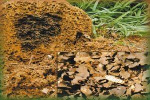 Descupinização de solo com produtos especiais e feita por profissionais experientes.
