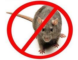 <b>Ratos e Roedores em Geral</b>