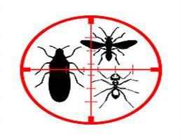 <b>Aranhas e Insetos Voadores</b>